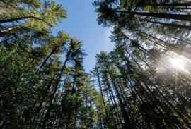 Looking up at trees at Farrel-McWhirter Park