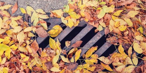 Leaves on top of storm drain