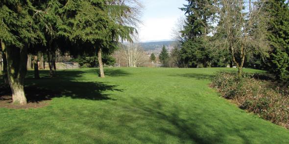 Grassy area amongst trees at Westside Park