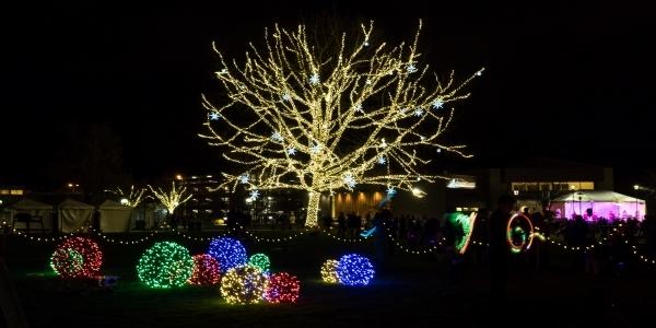 Tree lit with Christmas Lights