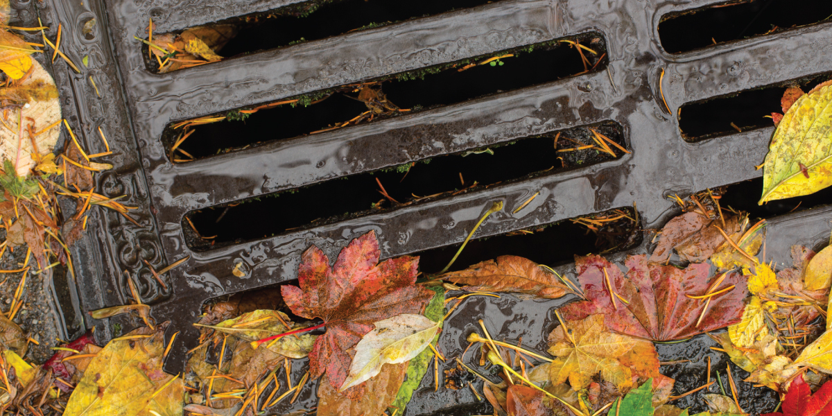 Leaves collecting at drain during rain storm