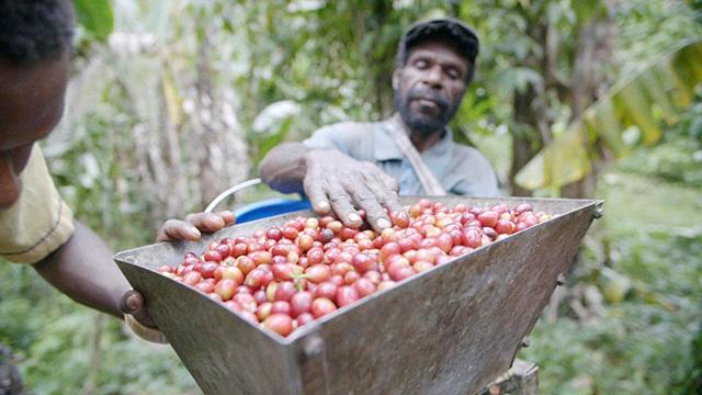Coffee farmers in Papua New Guinea