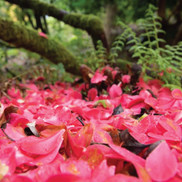 flower petals on the forest floor