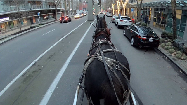 The view from a horse-drawn carriage