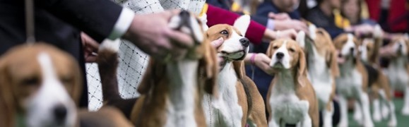 Whidbey Island Kennel Club's All-Breed Dog Show