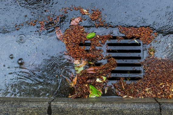 leaves and debris in storm drain