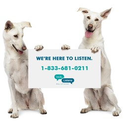 White dogs holding sign for Washington Listens 1-833-681-0211