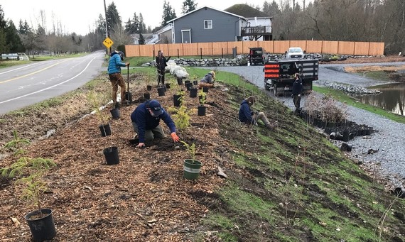 WCC crew replanting trees and shrubs at Meadow Creek Park detention pond.