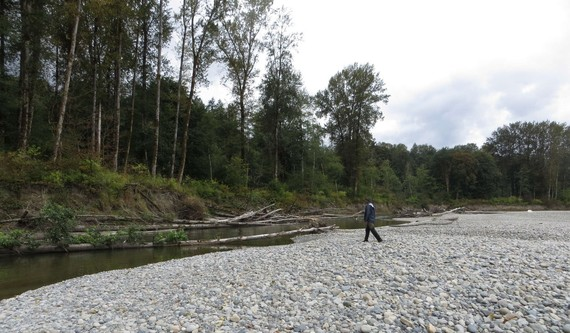 Skykomish River gravel bar and accumulated large woody debris.