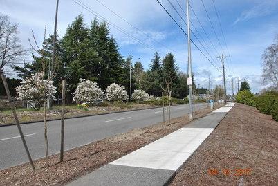 Pearl Street tree plantings