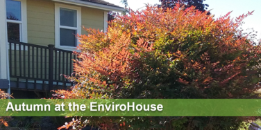 Autumn at the EnviroHouse