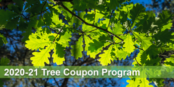 Tree Coupon Program