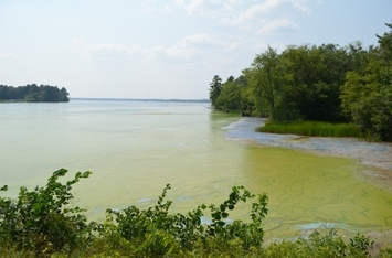 picture of a harmful algal bloom