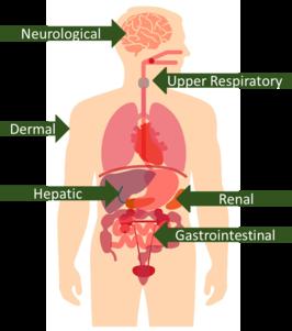 Human body digestion diagram
