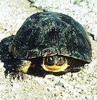 Help turtle crossings