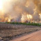 Help combat wildfires
