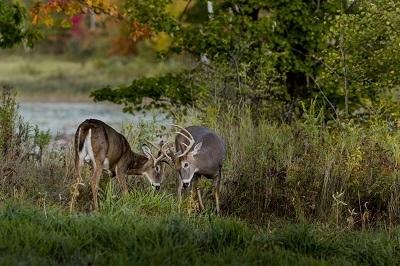 DNR August deer updates
