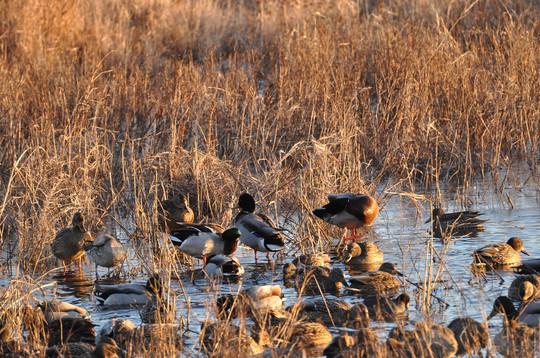 migratory bird season structure