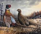 pheasant stamp
