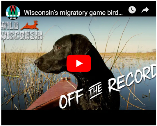 Off the Record Podcast Waterfowl Episode