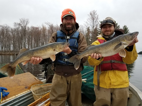 DNR staff hold walleye captured in a 2019 spring netting survey