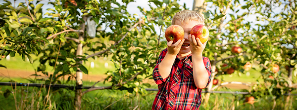 Young boy holding up freshly picked apples over his eyes