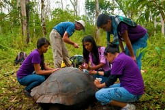 Teachers on field trip surrounding and studying a giant tortoise