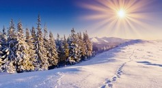 Snowy landscape with evergreen trees